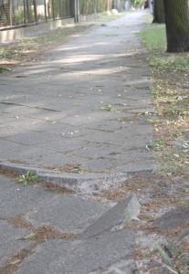 Stolperkanten auf dem Gehweg an der Waldstraße. Wurzeln der Straßenbäume haben die Gehwegplatten hoch gedrückt. (Foto: Jörg Levermann)