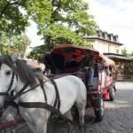 Die Pferde waren weder durch lauten Rock 'n Roll noch durch die feiernden Mitfahrer der Kremser aus der Ruhe zu bringen. (Foto: Jörg Levermann)